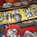 Fischmarkt Kochi / Cochin