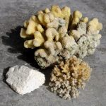 Korallen der Malediven