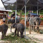 Elefantencamp - bereit zum Ausritt