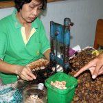 Cashew-Nuss wird verarbeitet