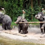 Elefantenshow im Singapur Zoo