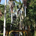 Allee im Botanischen Garten