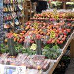Kakteen auf dem Blumenmarkt
